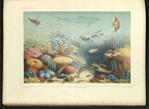 QL377-C5-H34-1876-specimens