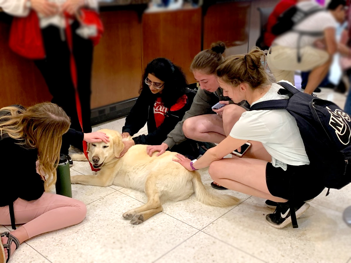 Four students surrounding and petting dog on tile floor