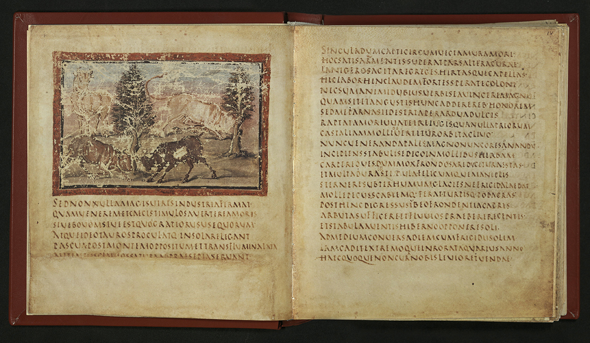 spread with illustration of bulls